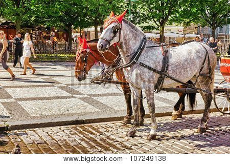 Prague, Czech Republic-september 12, 2015 Horses With Coach In  Prague On Street, People, Cetral Par
