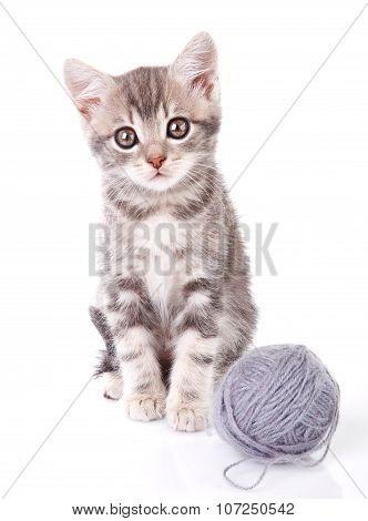 beautiful kitten with gray ball