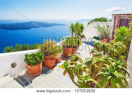 Terrace With Flowers.