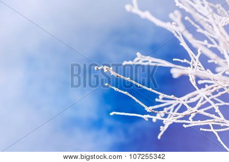 Hoarfrost On The Tree In Winter Forest.