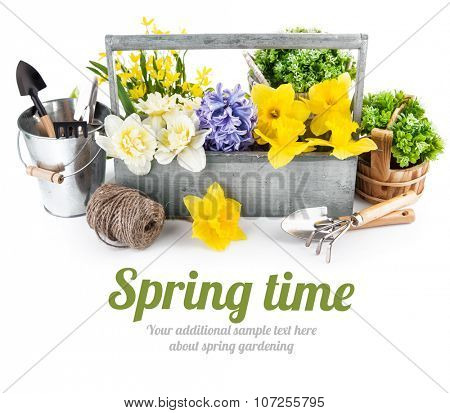 Spring flowers in wooden box with garden tools. Isolated on white background. Illustration