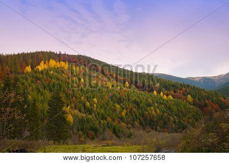 Autumn In The Carpathians.