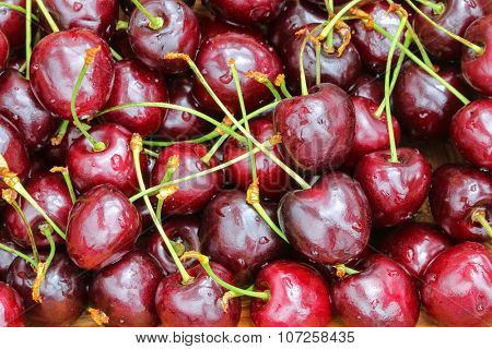 Closeup photo of ripe Wild Cherries with stems on them