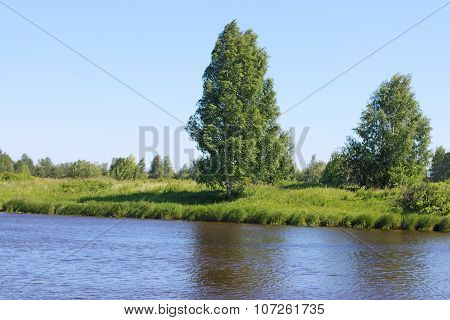 River Coast Line With Green Fresh Grass And Trees On Wind At Summer Day