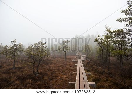Footbridge Along Kemeri Bog. Kemeri National Park, Latvia