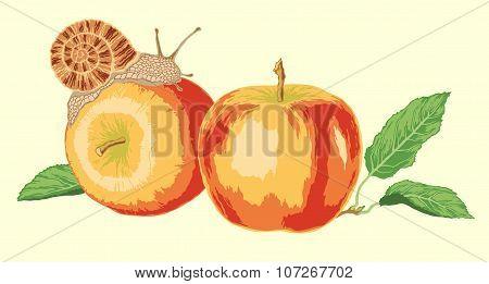 Grape snail on a ripe apples