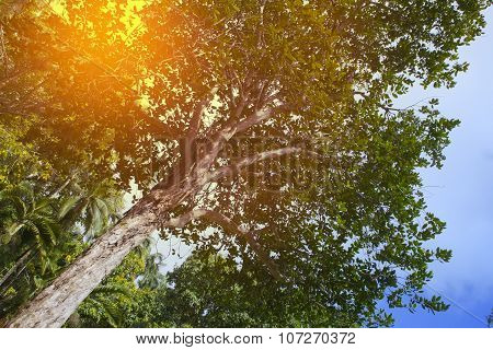Trees of tropical climate bottom view