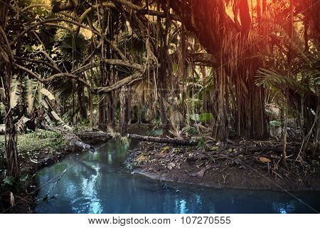 Nature of Mauritius. Lake and tropical trees.