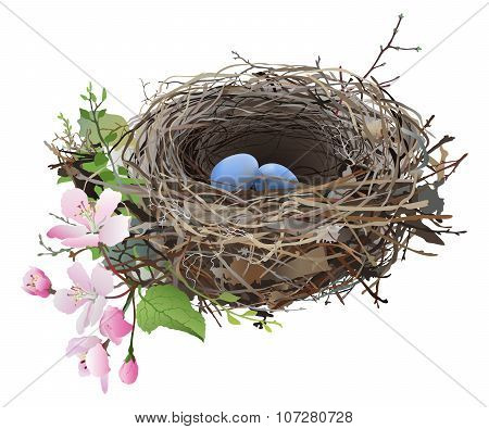 Bird's Nest with eggs.