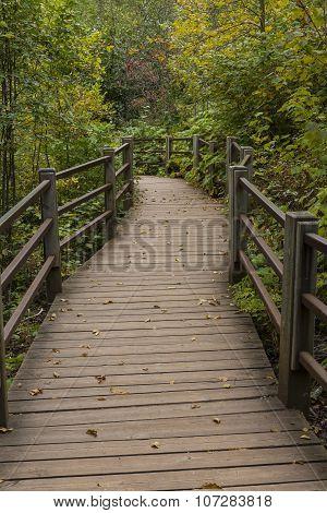Fall Boardwalk Trail