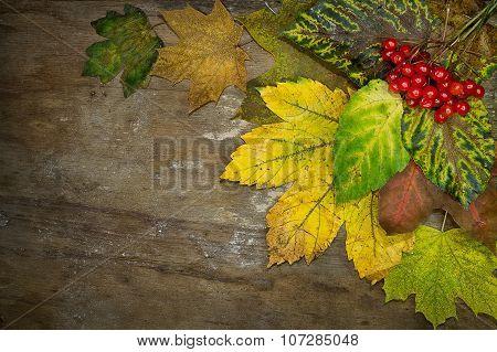 Autumn background with viburnum