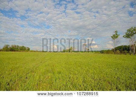 The flat landscape