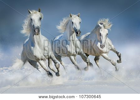 Horse herd run in snow