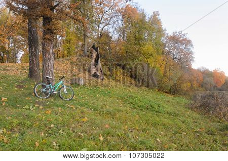 Mountain Bicycle Parked Near The Tree