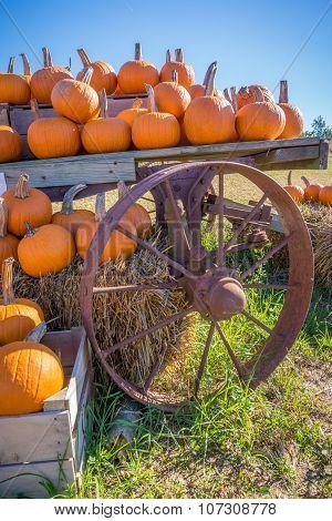Pumpkins and an old wagon wheel