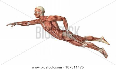Muscle Maps