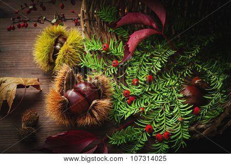 Fruits And Autumn Vegetation