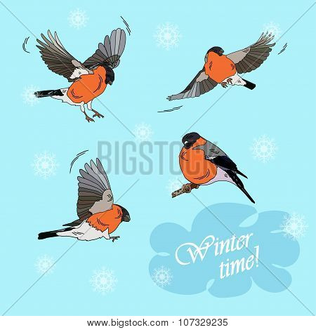 Bullfinches In Flight On A Blue Background