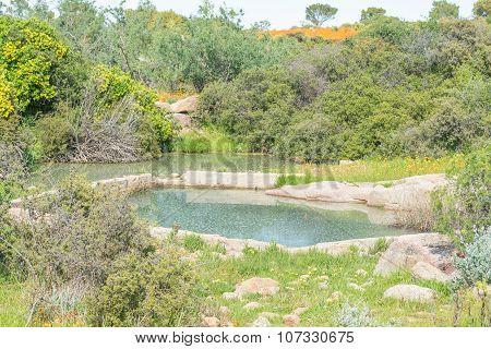 Skilpadgrouwater