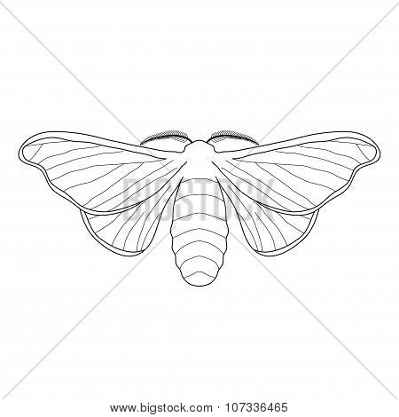 butterfly Bombyx mori.  Sketch of butterfly. butterfly isolated on white background.