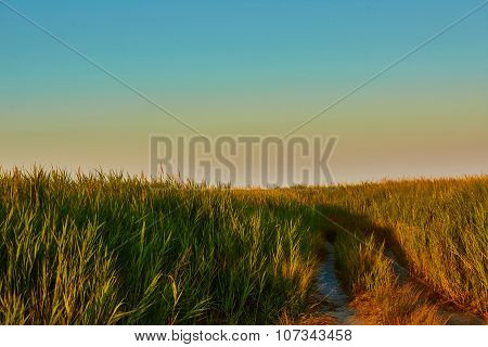 Road-fork in the prairie