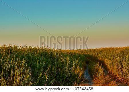 Road-fork in the prairie