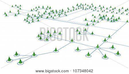 Fir Tree Lines