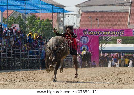 Buffalo Racing , Traditional Festival.