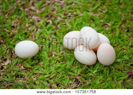 eggs on grass, Fresh eggs for cooking or raw material, fresh eggs background.