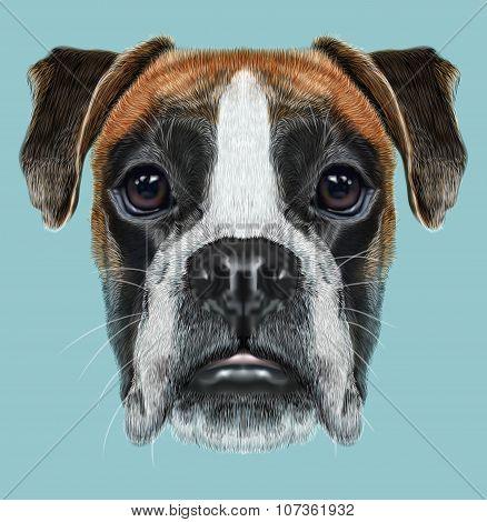 Illustrated Portrait of Boxer dog on blue background
