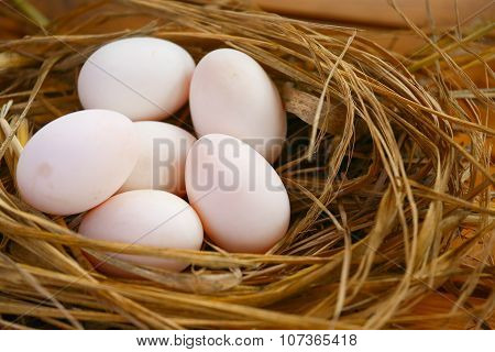 eggs in nest on the nature, Fresh eggs for cooking or raw material, fresh eggs background.
