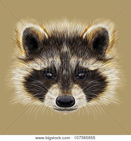Illustrated Portrait Of Raccoon