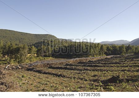 Timber Industry In Chile