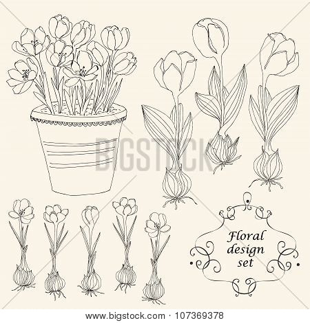 Vector Floral Design With Crocus And Tulips