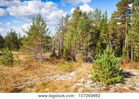Wild Natural Landscape, Forest Edges In Karelia