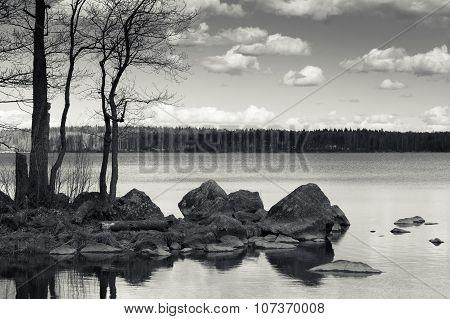 Monochrome Coastal Landscape, Leafless Trees