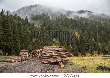 Wooden Logs In The Forest, Stacked In A Pile