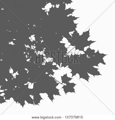 Marple leaves vector silhouette