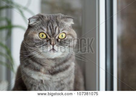 Cat Sits On The Windowsill.