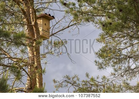 Birdhouse Hanging On A Pine Tree Against