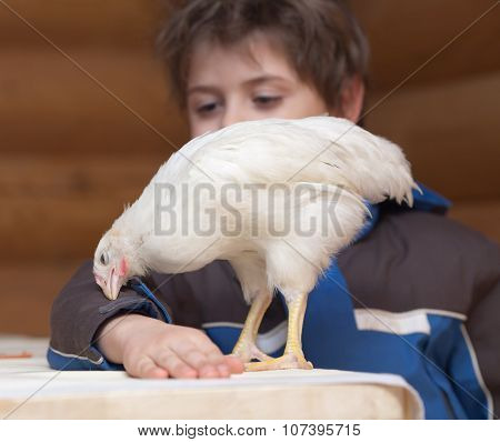 Young Hen And Boy
