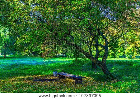 Bench Under Branchy Tree Among Green Grass