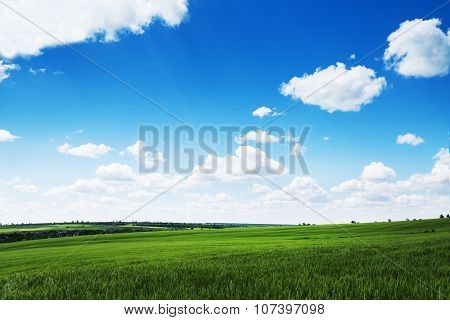 Green Wheat Field And Cloudy Sky, Agriculture Scene.