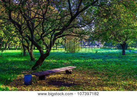 Wooden Bench Under Branchy Tree In Park