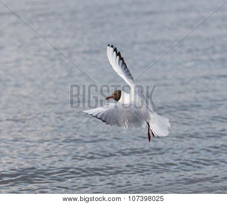 seagull flies over the sea.