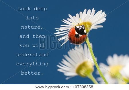 Look deep into nature, and then you will understand everything better - quote with a Ladybug on a tiny white wildflower