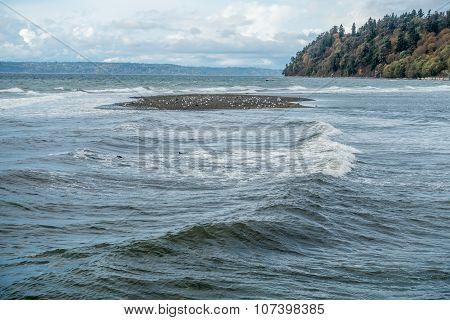 Seagull Sandbar
