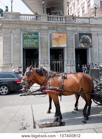 Horse Ahead Albertina Museum, Vienna