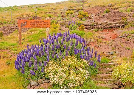 National Preserve Parque Ecologico Do Funchal