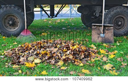 Heap Of Autumn Leaves Between A Rake And A Shovel